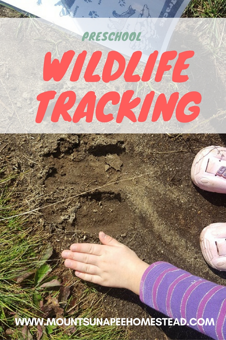 Preschool Wildlife Tracking