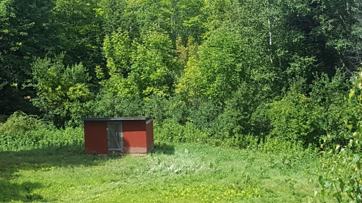Pig Shed in Field