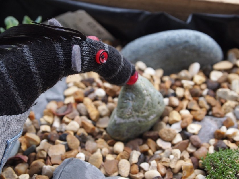 Bernard places the pebble carefully in the gravel