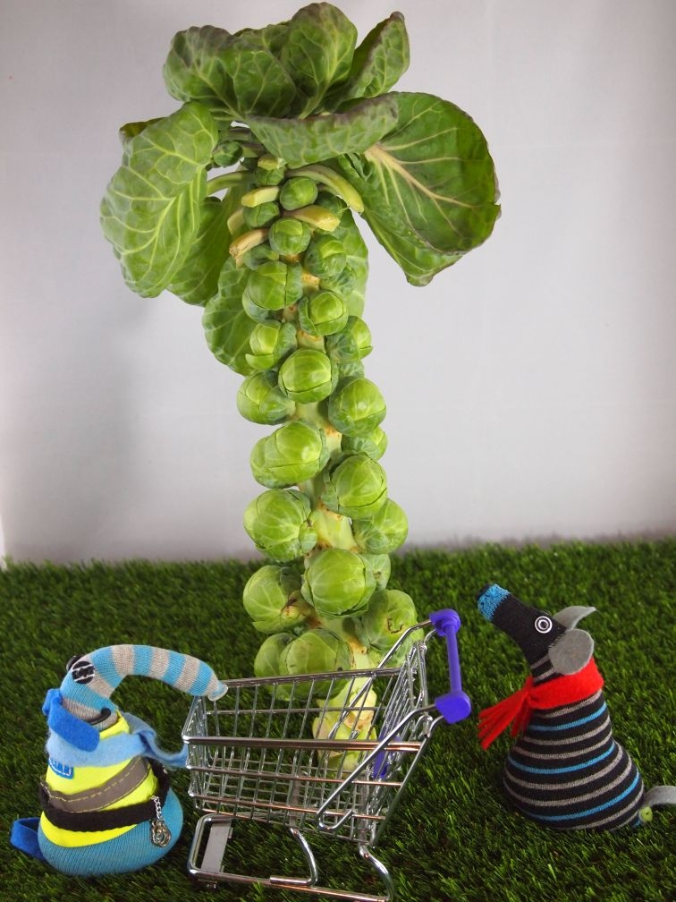Hypno and Arnold have brought the little supermarket trolley and ate looking at a stalk of sprouts growing like a tree.