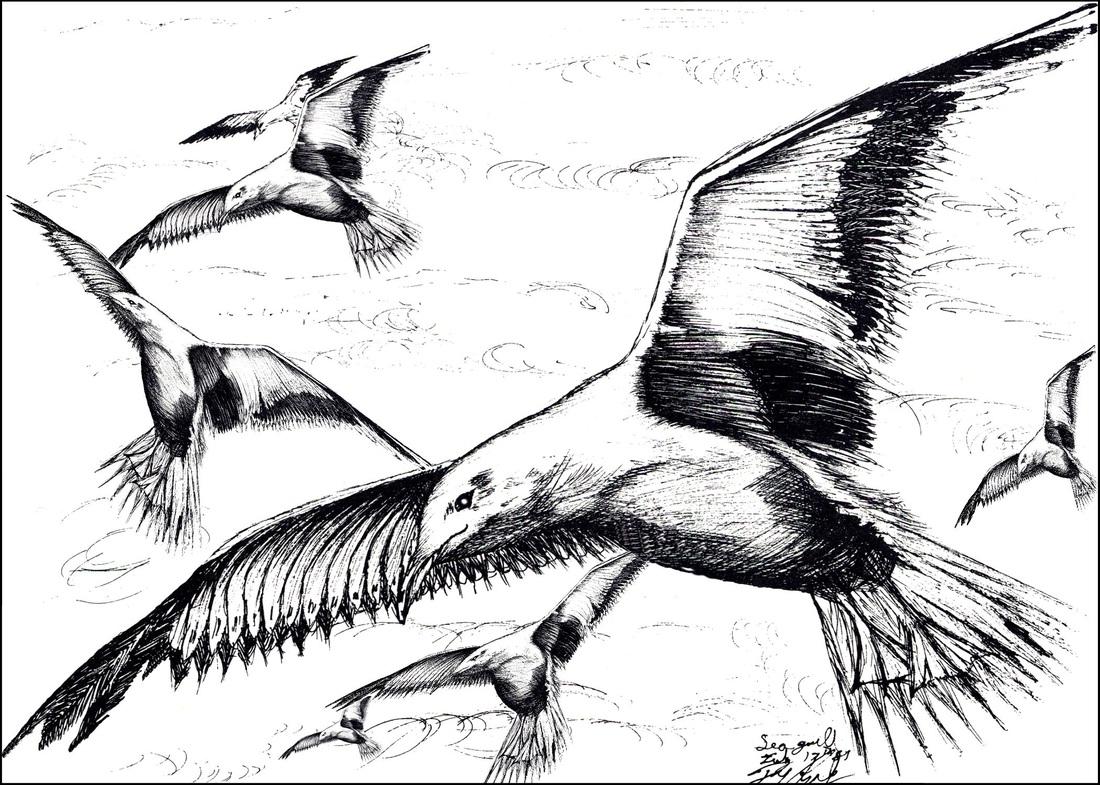 B Amp W Drawings Of Birds
