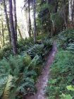 Move Into Mindfulness Forest Bathing San Juan Island