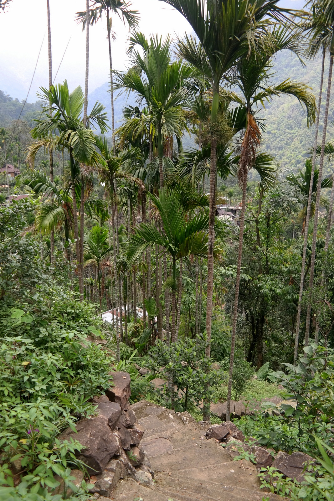 Nongriat-meghalaya-indie-india-inde-waterfall-root bridge-living root bridges