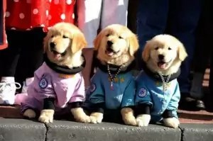 Space Puppies