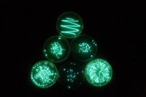 biofotoni emessi da alcune colture batteriche.
