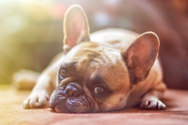 Your dog needs to be safe while movers pack your home.