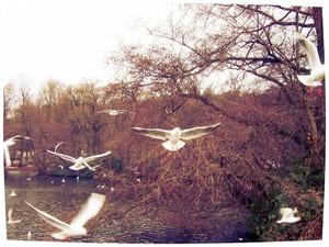 Onze gedachten zijn als vogels, wij volgen hun vlucht, maar niemand weet, waar zij hun nesten hebben. Antoon Vloemans