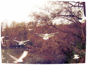 Er vliegen altijd meeuwen boven de zee, wat wij ook proberen, wij zullen nooit vliegen als zij, wat zij ook proberen, zij zullen nooit mensen zijn. Conrad van de Weetering