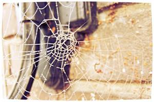 't web van leugen wordt altijd gevangen door de vloek en zal altijd weer terugkeren in de zelf.