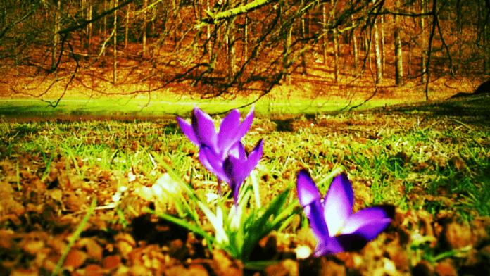 Voorjaarsmoeheid: winterbeuheid. Kadé Bruin