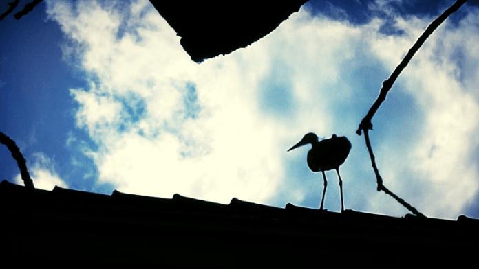 Vogels sterven staande. Louis Paul Boon