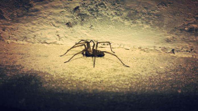 'Welkom in mijn salon!' zei de spin tot de vlieg. Mary Howitt