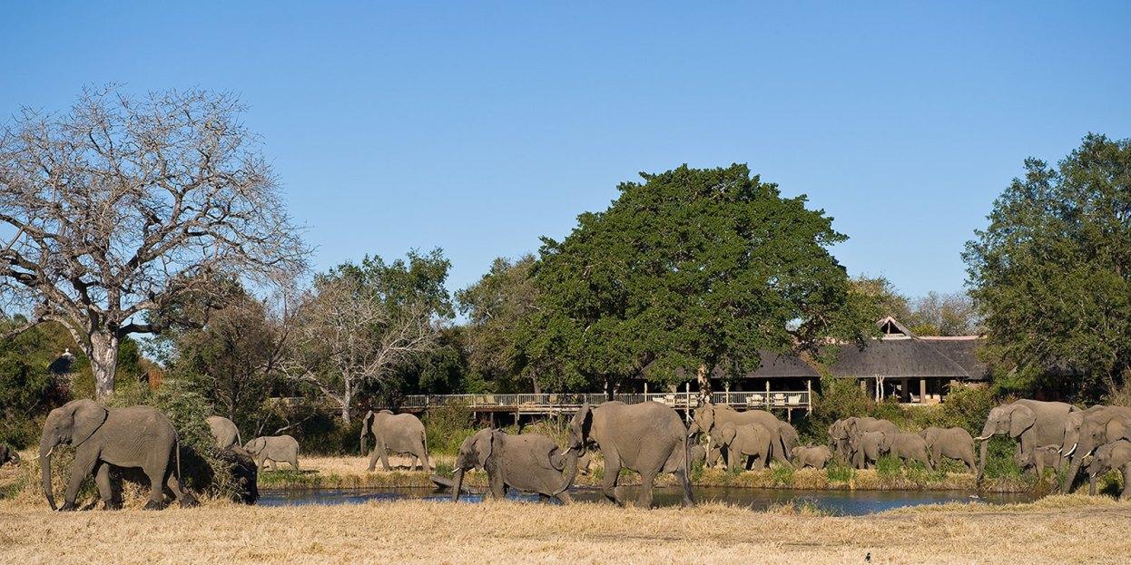 Elephants at BUsh Lodge