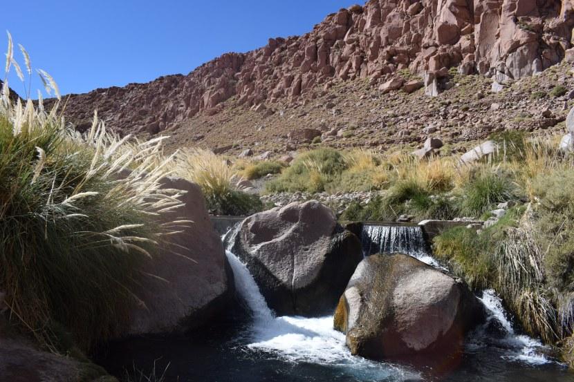 Warm spings in Atacama Desert