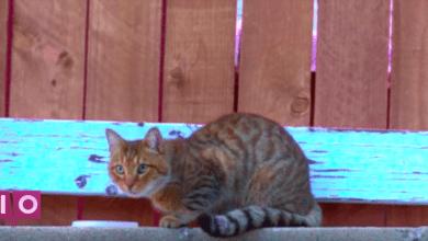 Photo of Mac DeMarco a fait un clip pour le chat qui vit derrière son garage