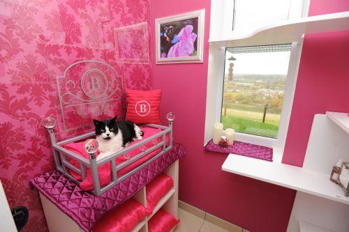 hôtel de base pour chats