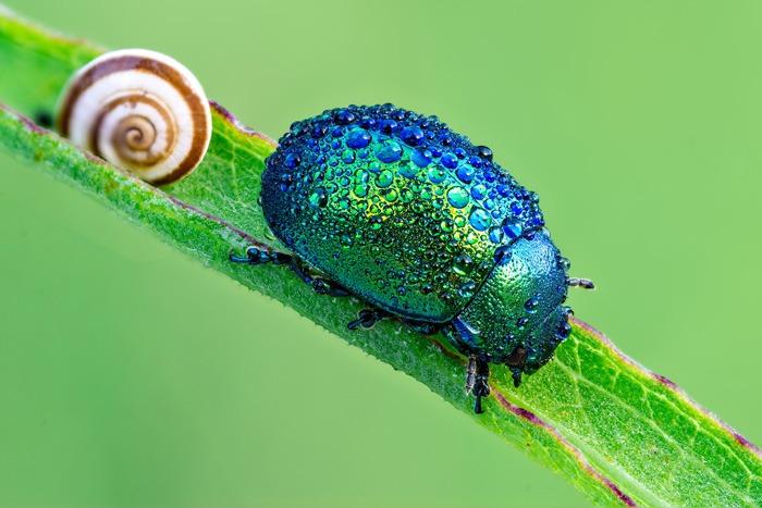 4k arrière-plans de bureau Beetle
