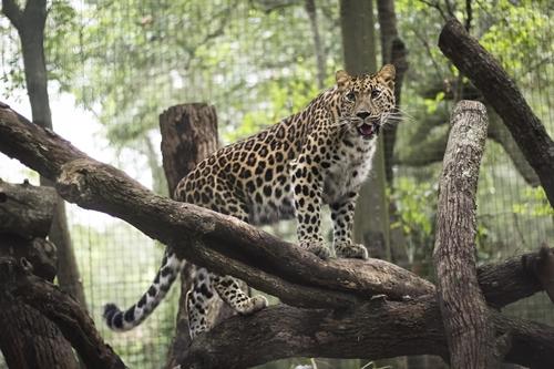 Légendes du zoo et des jardins de Jacksonville