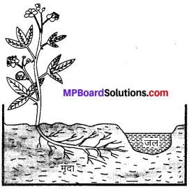 MP Board Class 10th Science Solutions Chapter 7 नियंत्रण एवं समन्वय 1