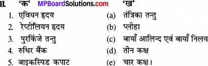 MP Board Class 11th Biology Solutions Chapter 18 शरीर द्रव तथा परिसंचरण - 2