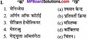 MP Board Class 11th Biology Solutions Chapter 21 तंत्रिकीय नियंत्रण एवं समन्वय - 1