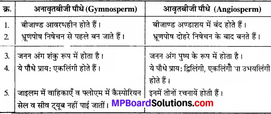 MP Board Class 11th Biology Solutions Chapter 3 वनस्पति जगत - 10