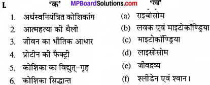 MP Board Class 11th Biology Solutions Chapter 8 कोशिका जीवन की इकाई - 1