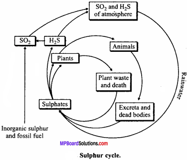 MP Board Class 12th Biology Important Questions Chapter 14 Ecosystem 6