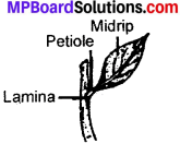 MP Board Class 6th Science Solutions Chapter 7 Getting to Know Plants img 10