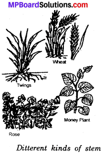 MP Board Class 6th Science Solutions Chapter 7 Getting to Know Plants img 4