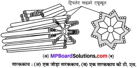 MP Board Class 9th Science Solutions Chapter 5 जीवन की मौलिक इकाई image 11
