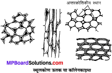 MP Board Class 9th Science Solutions Chapter 6 ऊतक image 11