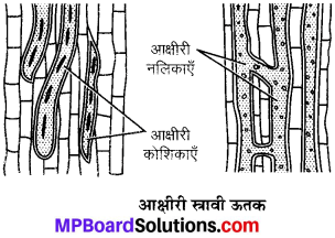 MP Board Class 9th Science Solutions Chapter 6 ऊतक image 16