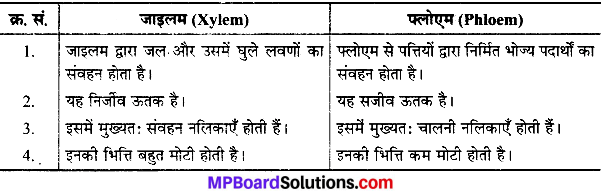 MP Board Class 9th Science Solutions Chapter 6 ऊतक image 17