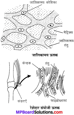 MP Board Class 9th Science Solutions Chapter 6 ऊतक image 27