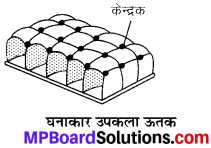 MP Board Class 9th Science Solutions Chapter 6 ऊतक image 28