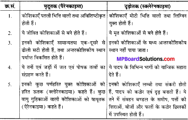 MP Board Class 9th Science Solutions Chapter 6 ऊतक image 39