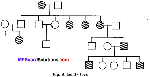 MP Board Class 12th Biology Solutions Chapter 5 Principles of Inheritance and Variation 10