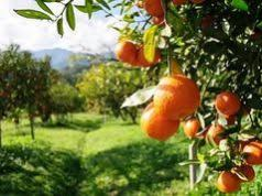 South African citrus exports hard hit by strikes