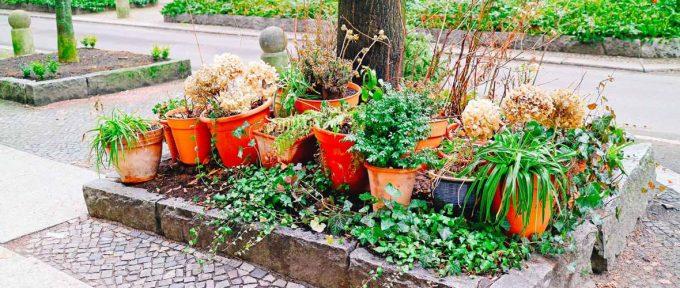 Mulhousiens, demandez votre permis de végétaliser et fleurissez votre rue