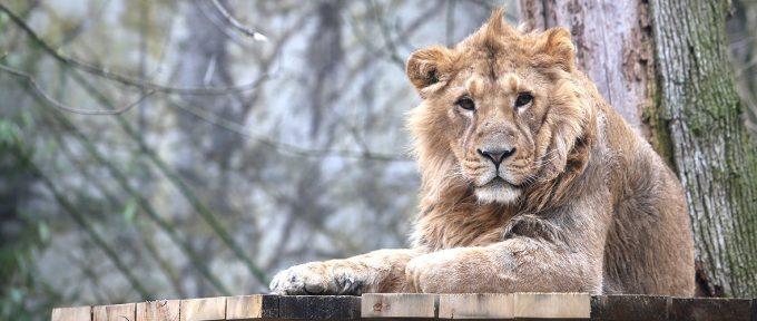 De nouveaux arrivants au zoo de Mulhouse