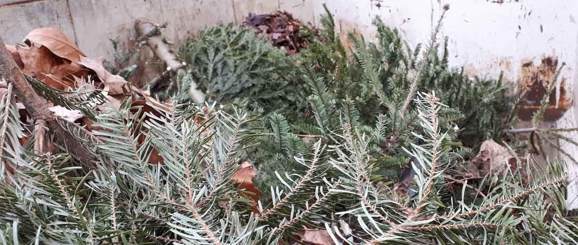 Des enclos à sapins pour lutter contre les dépôts « sauvages » | M+ Mulhouse