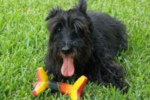Jak bawić się z psem