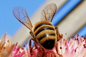 Jak walczyć z ukąszeniami owadów