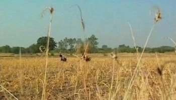 maharashtra-crop