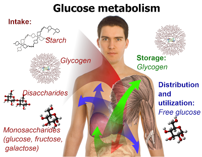 cause-of-decreased-metabolism