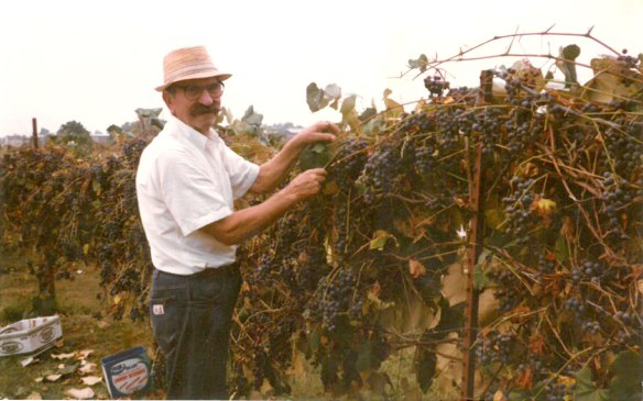 grandpa_with_grapes_1
