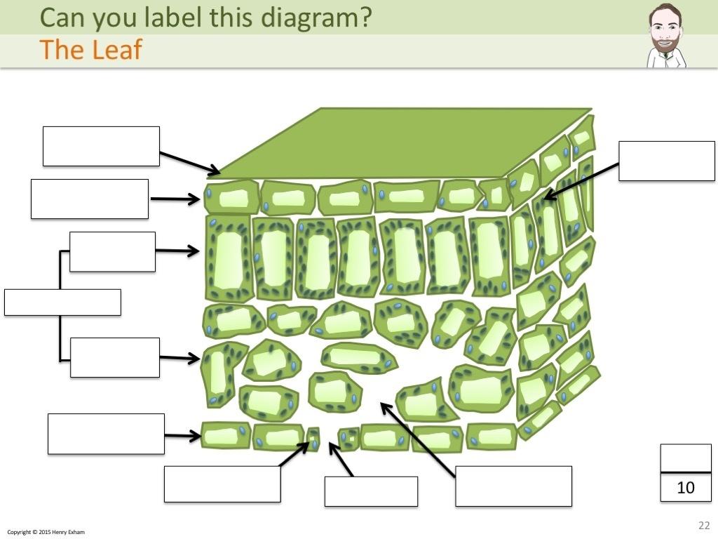Igcse Biology Labelling Diagrams