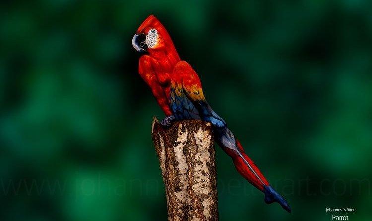 pappagallo full - Questo non è un vero pappagallo!