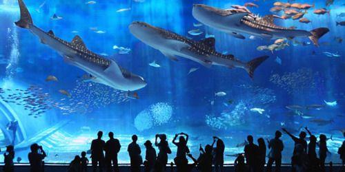 99e5750c503e2b0e7c7c4eded8bfa0b6 - Corea del sud: squalo attacca e mangia un suo simile(video)
